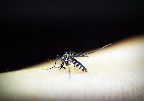파주서 올해 첫 말라리아 원충 감염 얼룩날개모기 발견