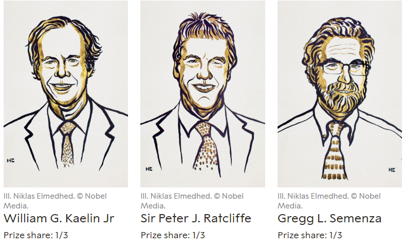 노벨상 수상한 '산소농도와 세포반응'에 대한 연구, 왜 중요할까?